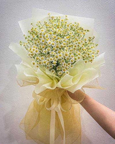 Bó hoa cúc tana xinh xắn - LDNK105