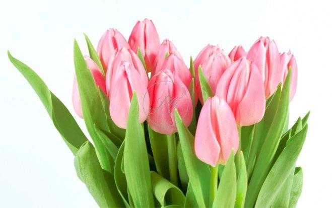 8 cách tiết kiệm khi mua hoa trang trí nhà(4)