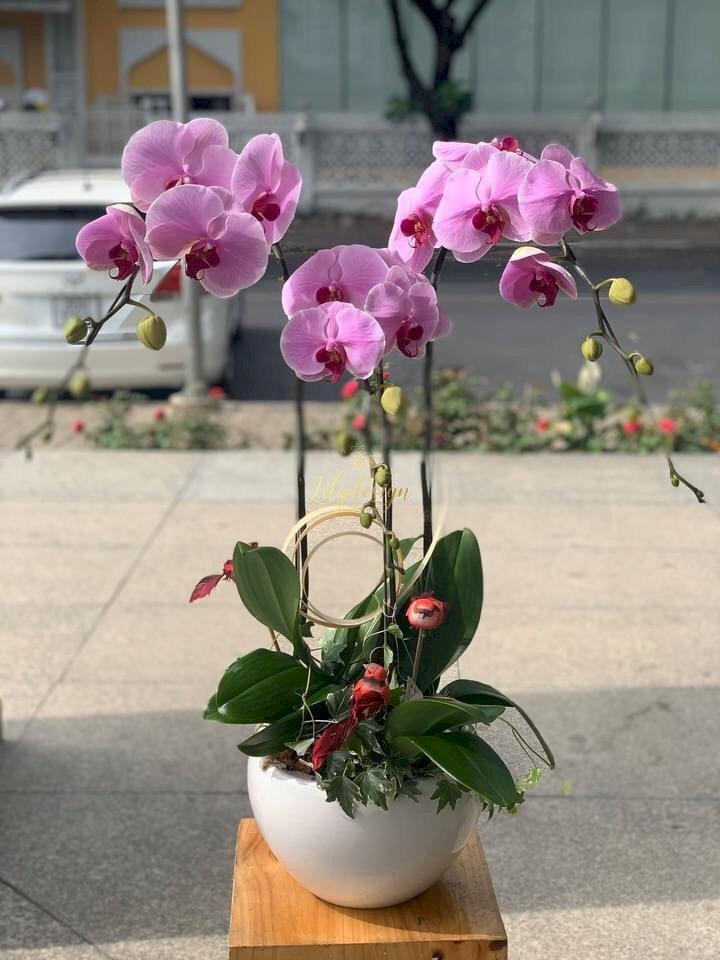 Chậu hoa lan hồ điệp 3 cành màu tím - HLNK01