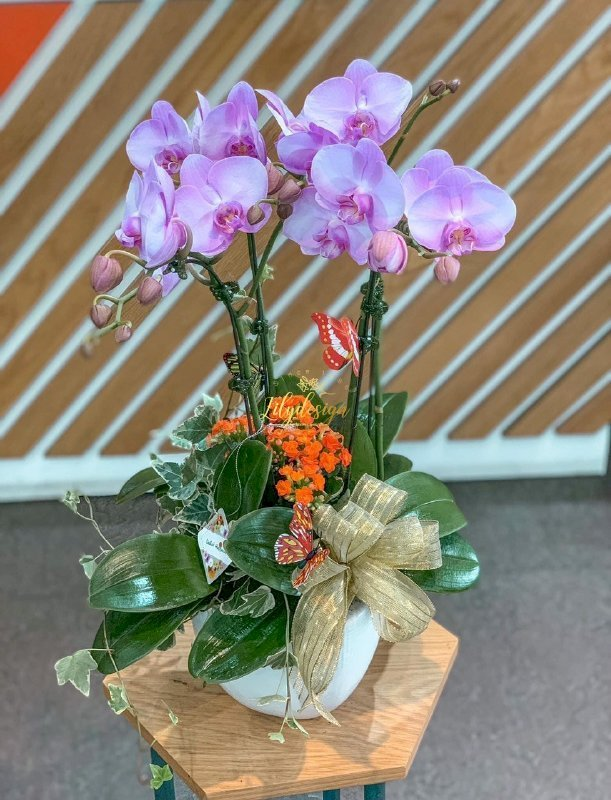 Chậu hoa lan hồ điệp 4 cành màu tím nhạt - HLNK07